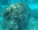Imagini subacvatice din Zakynthos