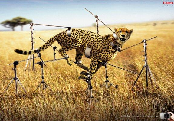 canon-digital-camera-cheetah-original-80488