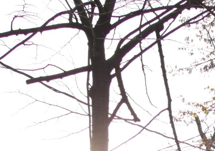screen-shot-2013-12-01-at-22-37-02