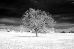 Fotografie in infra-rosu