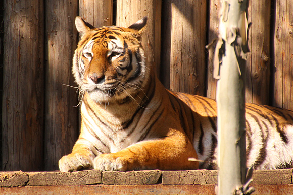 Cu Tamron 18-270mm la Zoo