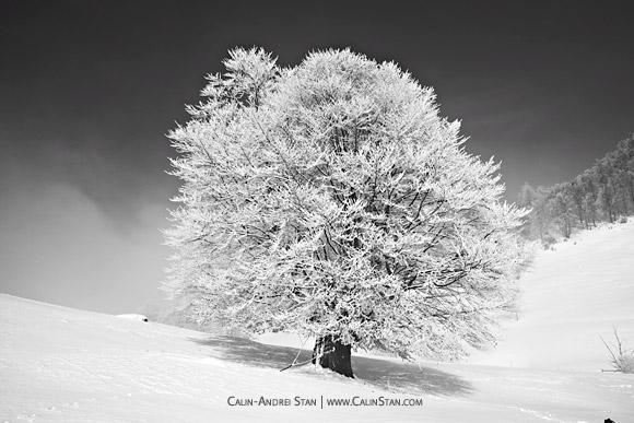 Iarna pe Culoarul Rucar-Bran