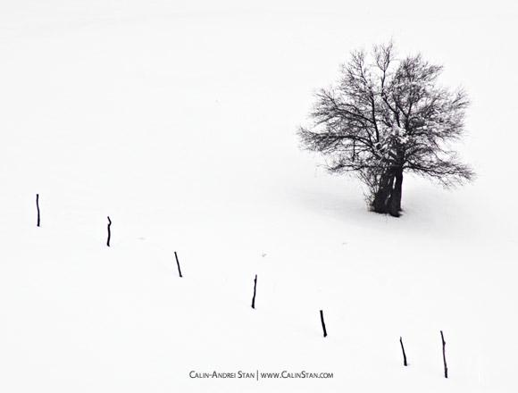Fotografii minimaliste?