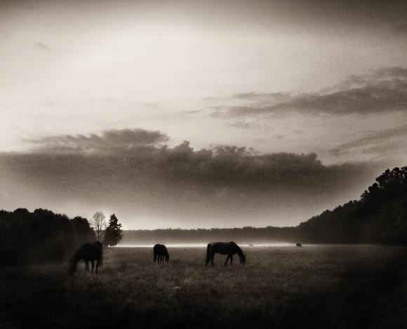Copyright - Andrei Baciu.