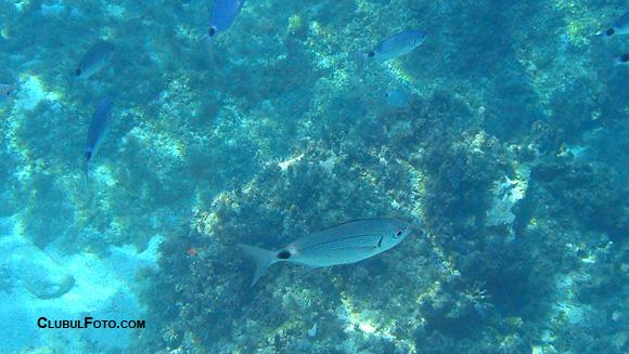 Imagini subacvatice din Zakynthos, cu Sony Tx20