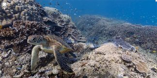 Imagini panoramice spectaculoase din Marea Bariera De Corali, Australia