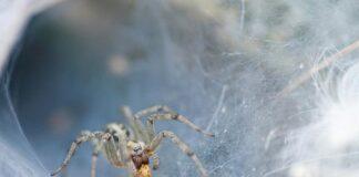 Sfatul Saptamanii - Insectele. Foto: Dan Dinu