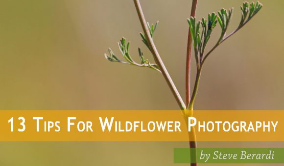 13 tips on wildflower photography