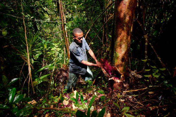 Illegal Logging in Madagascar / Toby Smith/Reportage by Getty Images