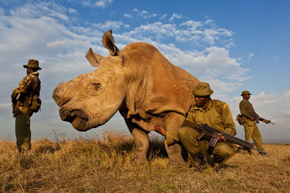 8. Brent Stirton / Getty Images Reportage