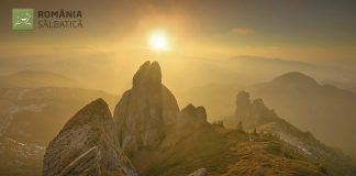 Documentar: Descopera Romania Salbatica