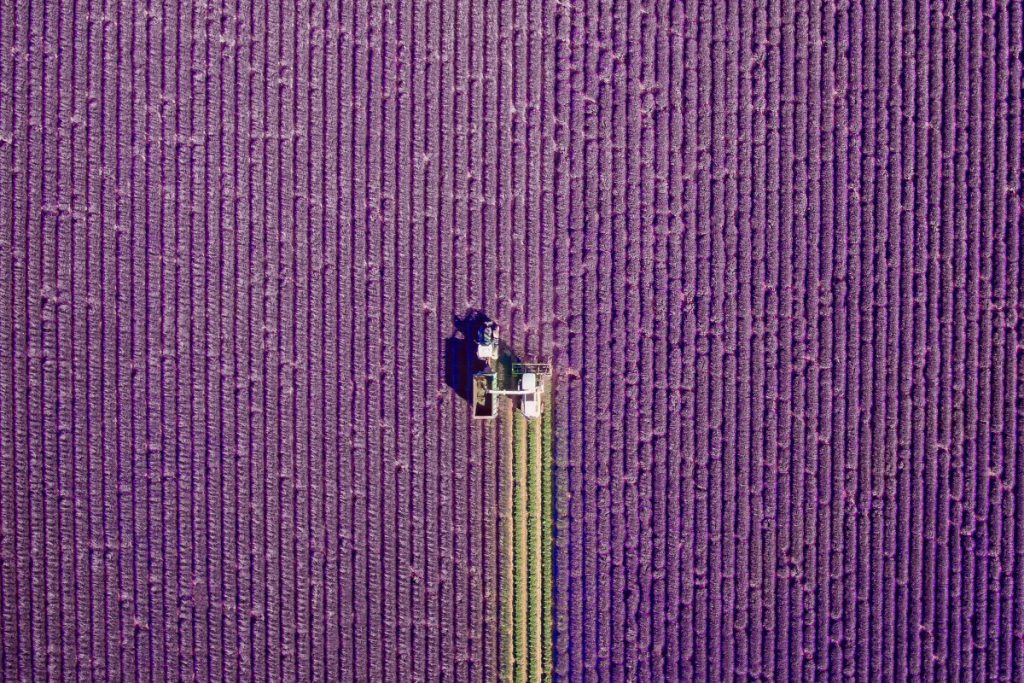 valensole, Provence, France by Jcourtial