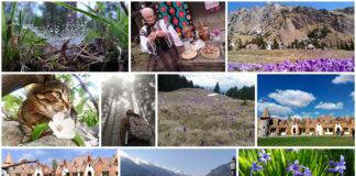 Colajul celor 10 fotografii castigatoare in concursul ASUS